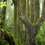 Grote dikke bomen in de oertijd