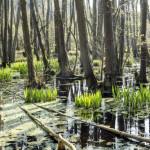 Een moeras in de oertijd