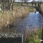 Bakel - De Esperloop stroomt door het drassige Goor. Dit gebied zou vaak onder water staan als deze niet regelmatig wordt drooggepompt ten behoeve van de landbouw