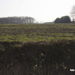 Bakel - Een bolle Akker aan het Nuijeneind, een van de hoogste in Brabant