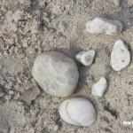 Bakel - Keien op de oevers van de Bakelse plassen uit zeer oude beddingen waar vroeger de Maas stroomde