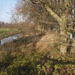 Gemert - De Snelle Loop vormt de grensbeek met Laarbeek. Een bijzondere dubbele loop met een houtwal in het midden bij de Derde Steeg